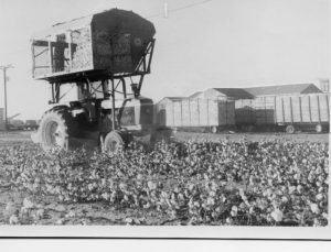 Cotton harvesting time, earlier Slaton